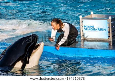 MIAMI,US - JANUARY 24,2014: Lolita,the killer whale at the Miami Seaquarium.Founded in 1955,the oldest oceanarium in the United States,the facility receives over 500,000 visitors annually  - stock photo