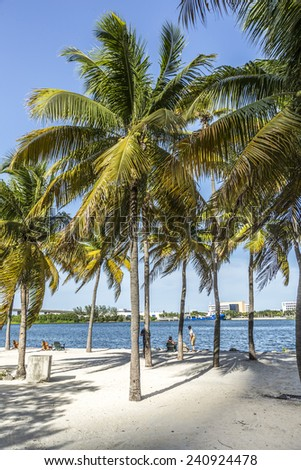 MIAMI, USA - AUGUST 19, 2014 : people relax at the downtown beach under palms and look at the Port of Miami with containers and cranes in Miami, USA.