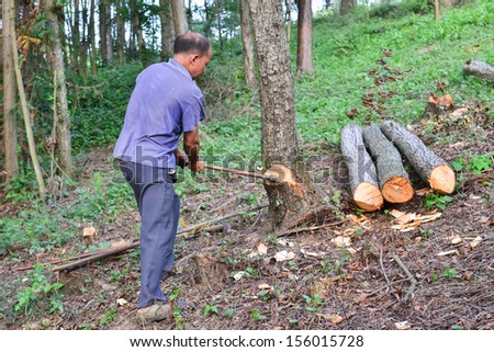 MianYang, CHINA - Aug 24: unidentified Chinese farmers doing Logging forest on Aug 24, 2013 in MianYang, China. For many lumberjack,it is the main source of income (around $900 annual).