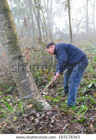 MianYang, China  Feb 1, 2014: chinese logger is logging in the forest.
