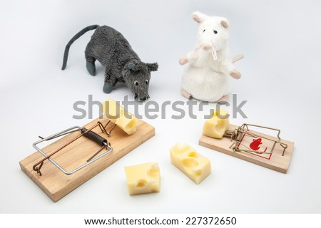mice and rat-traps with cheese on white background - stock photo