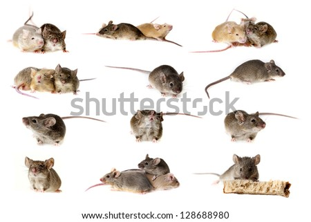 mice collection - stock photo