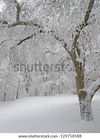 Michigan Winter Snow - stock photo