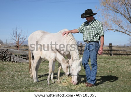 mid-adult cowboy with white white horse and baby in a field