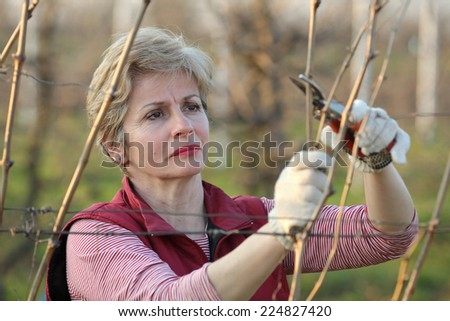 Mid adult female pruning grape in a vineyard selective focus on face - stock photo