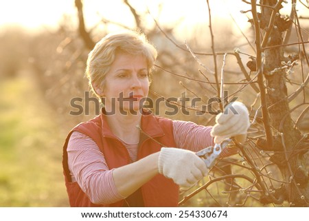 Mid adult female pruning tree in orchard selective focus on face - stock photo