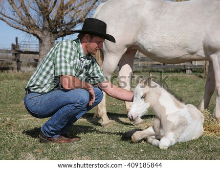 mid-adult western man with white horse and foal - stock photo