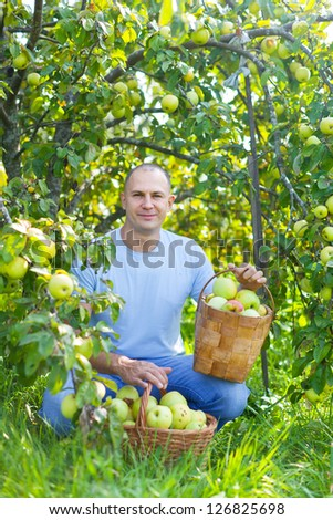 Middle-aged man with basket of harvested apples in garden - stock photo