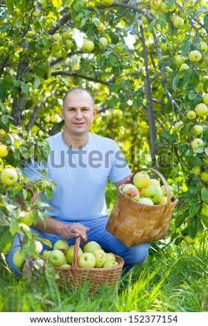 Middle-aged man with basket of harvested apples in garden