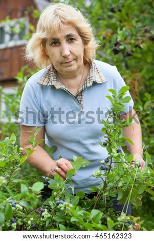 Middle aged woman gathering berries of blueberry from bush in garden