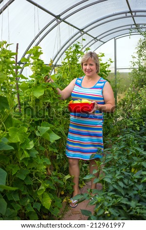 Middle-aged woman picking harvests in the greenhouse