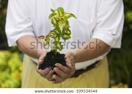 Midsection of a senior man holding a plant in garden - stock photo