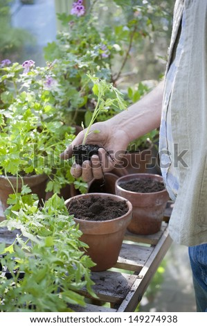 Midsection of senior man holding sapling in greenhouse - stock photo