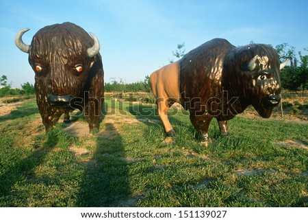 MIDWEST - CIRCA 1980's: Roadside attraction of American Buffalo replicas