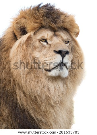 Mighty lion