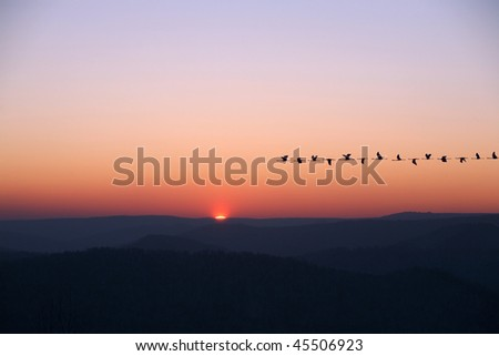 migrating birds in sunrise - stock photo