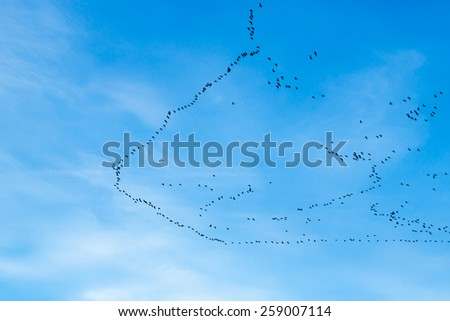 migration of birds to the south or maybe to the north - stock photo