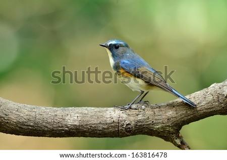 migratory bird in taiwan - stock photo