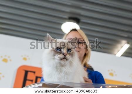 MILAN, ITALY - JUNE 12: Beautiful cat at Quattrozampeinfiera, event and activities dedicated to dogs, cats and their owners on JUNE 12, 2016 in Milan.