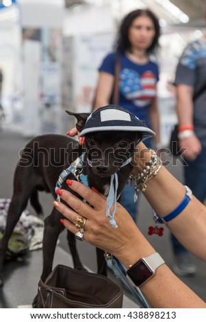 MILAN, ITALY - JUNE 12: Cute dog at Quattrozampeinfiera, event and activities dedicated to dogs, cats and their owners on JUNE 12, 2016 in Milan.