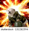 military dog - english bulldog dressed up in army camo with explosion in the background - stock photo