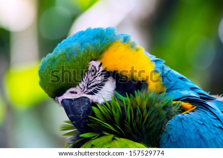 Military Macaw - stock photo