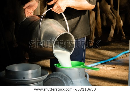 milk a cow, agriculture industry, farming and animal husbandry concept