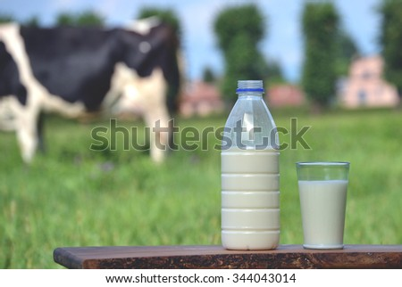 Milk bottle and glass on cow farm background. - stock photo