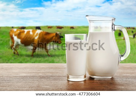 Milk in glass and in jar on table with cows on the meadow
