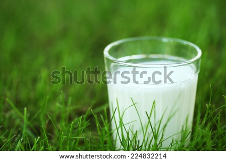 Milk in glass on grass close-up - stock photo