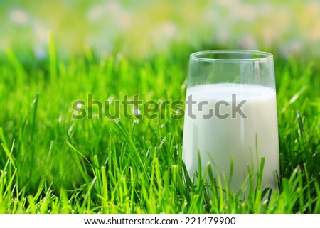 Milk in glass on grass on natural background - stock photo
