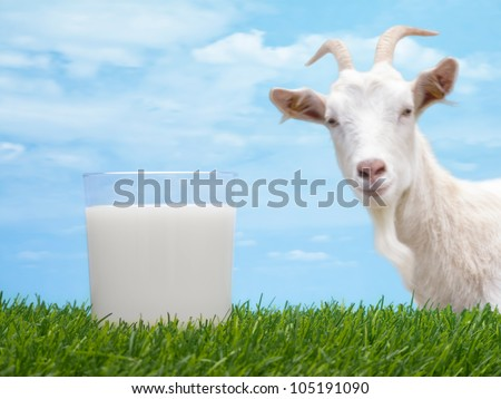 Milk in glass on grass with goat and sky in background - stock photo