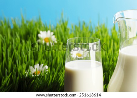 Milk jug and glass on fresh green grass with chamomiles - stock photo