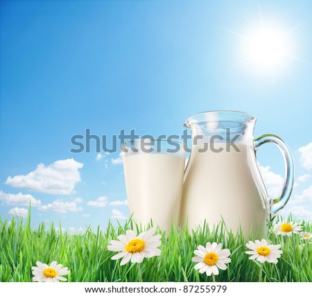 Milk jug and glass on the grass with chamomiles. On a background of the sunny sky with clouds. Dairy concept.