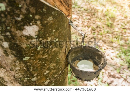 Milky latex extracted from rubber tree.