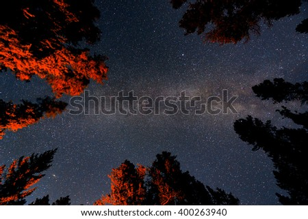 Milky Way in forest in Banff National Park - stock photo