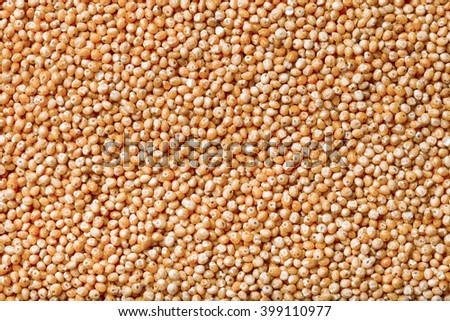 Millet seeds as texture for background. Toned.