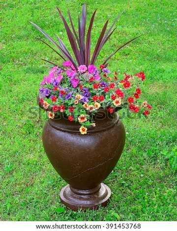 Million bells flowers and cordyline in a stylish container. - stock photo