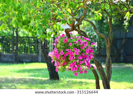 Million bells. Flowers hanging on a tree. - stock photo