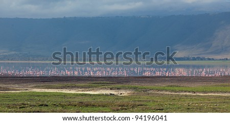 Millions of flamingos on lake in the Crater Ngorongoro National Park - Tanzania - stock photo
