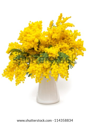 mimosa flower - stock photo