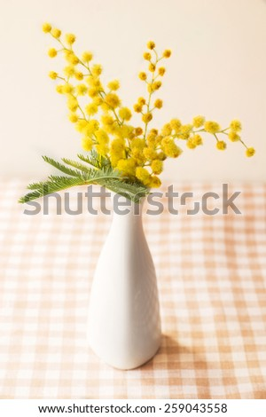 mimosa flower in a vase - stock photo