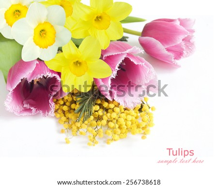 Mimosa, tulip and narcissus flowers isolated on white background with sample text - stock photo
