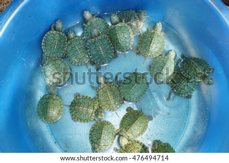 Mini green turtles in a water bucket for sale on the street in Vietnam