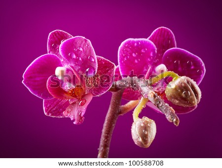 mini orchid on pink background - stock photo