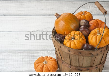 Mini Pumpkins and Chestnuts in Harvest Basket on Rustic White or Gray Board Background with room or space for copy, text.  Horizontal - stock photo