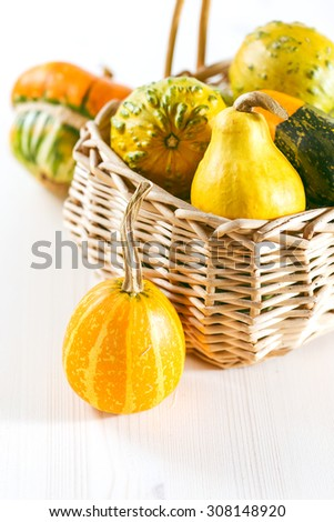Mini pumpkins in bucket on white background - stock photo