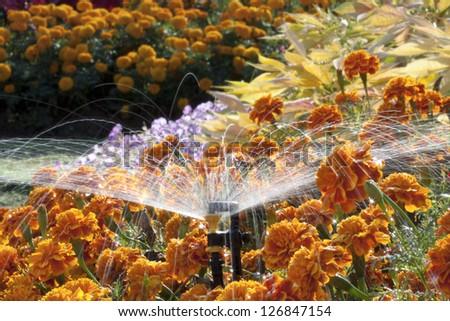 Mini sprinkler head watering the flowers in garden - stock photo