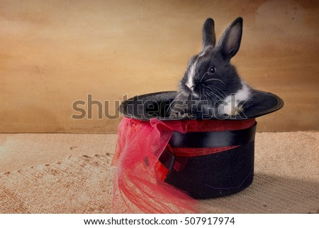 Miniature Dutch rabbit in a magic hat. foci