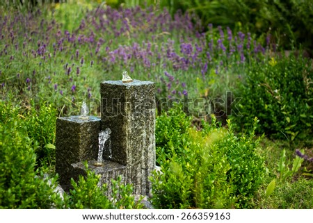 Miniature fountain and Salvia pratensis